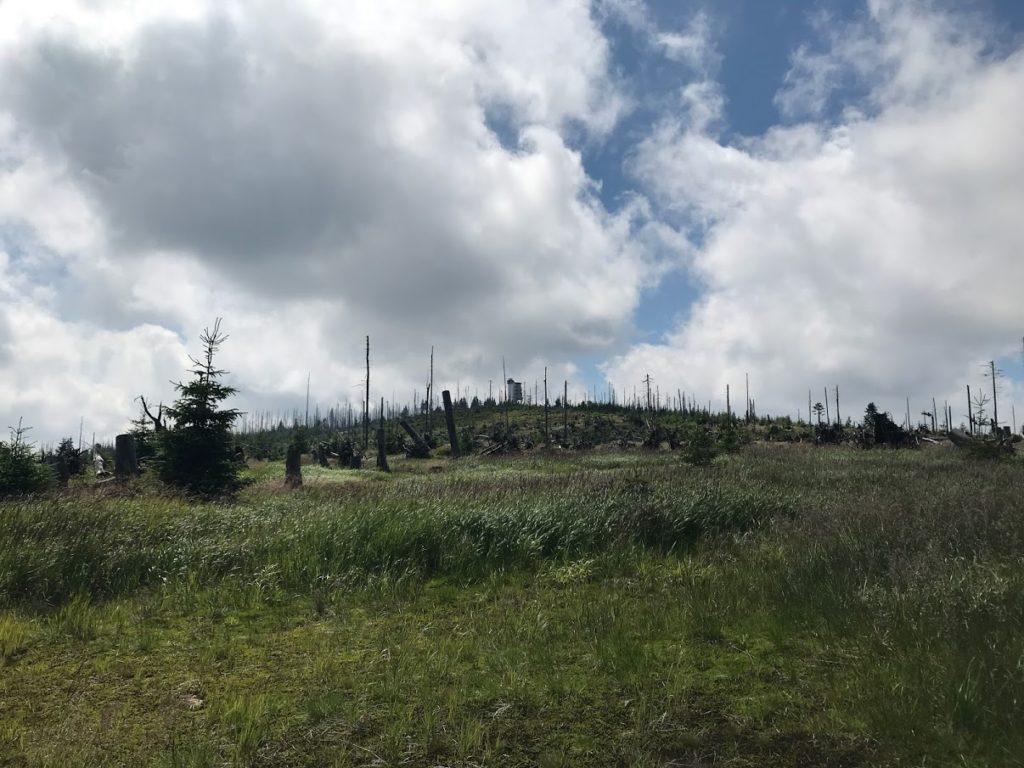 Rozhledna Poledník mezi uschlými kmeny bývalého lesa